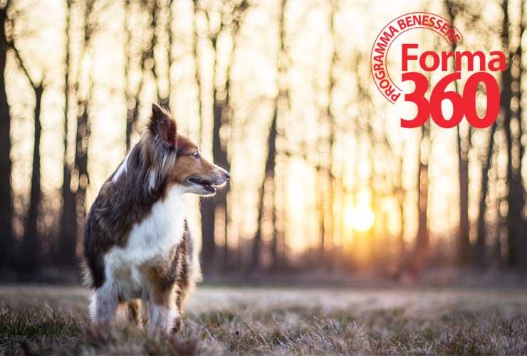 Cane Programma Benessere 360 No Cruelty Pet360